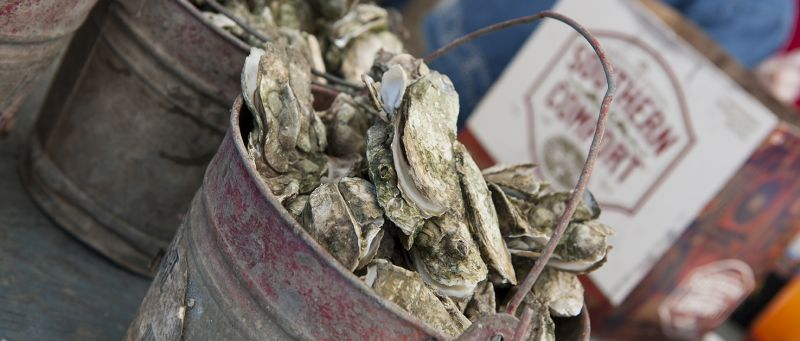 Feast at Fall Oyster and Seafood Festivals