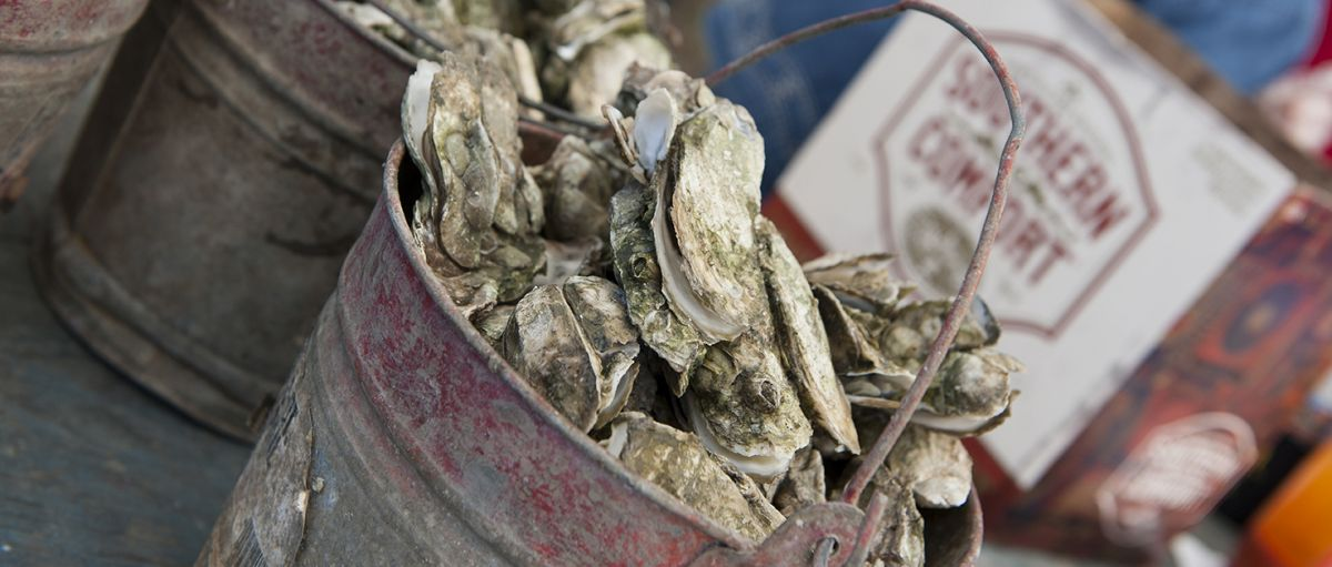 Feast at Fall Oyster and Seafood Festivals   VisitNC com