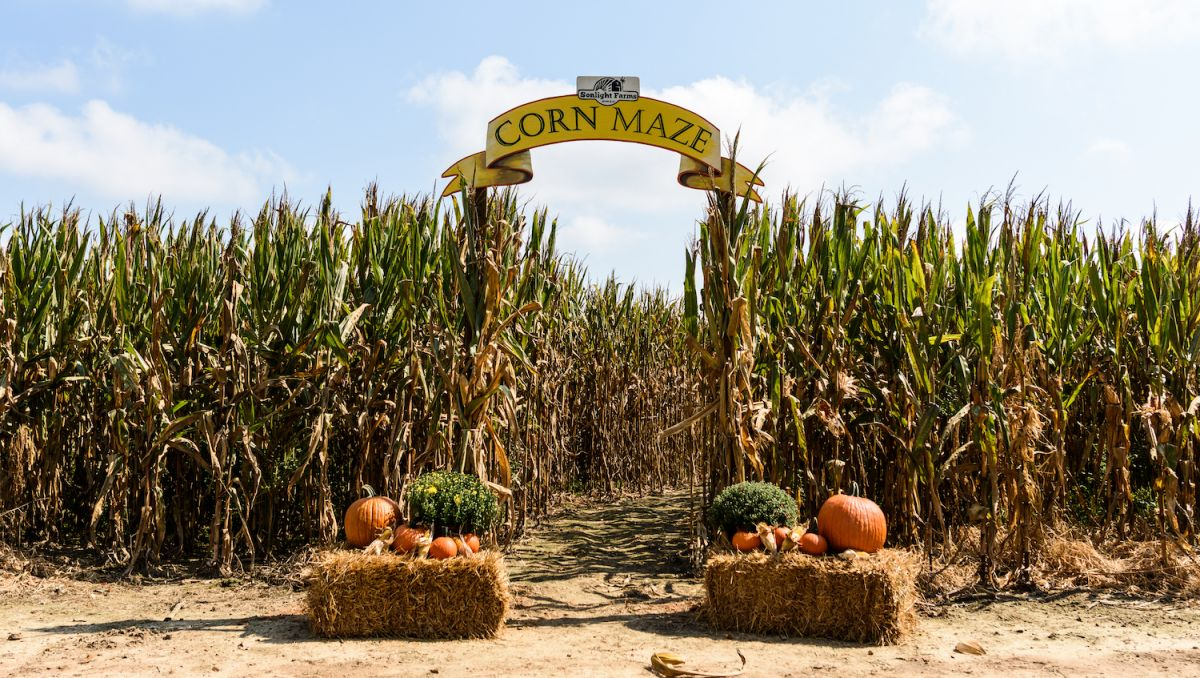 Apple-Picking, Pumpkins, Corn Mazes and Hayrides at Farms