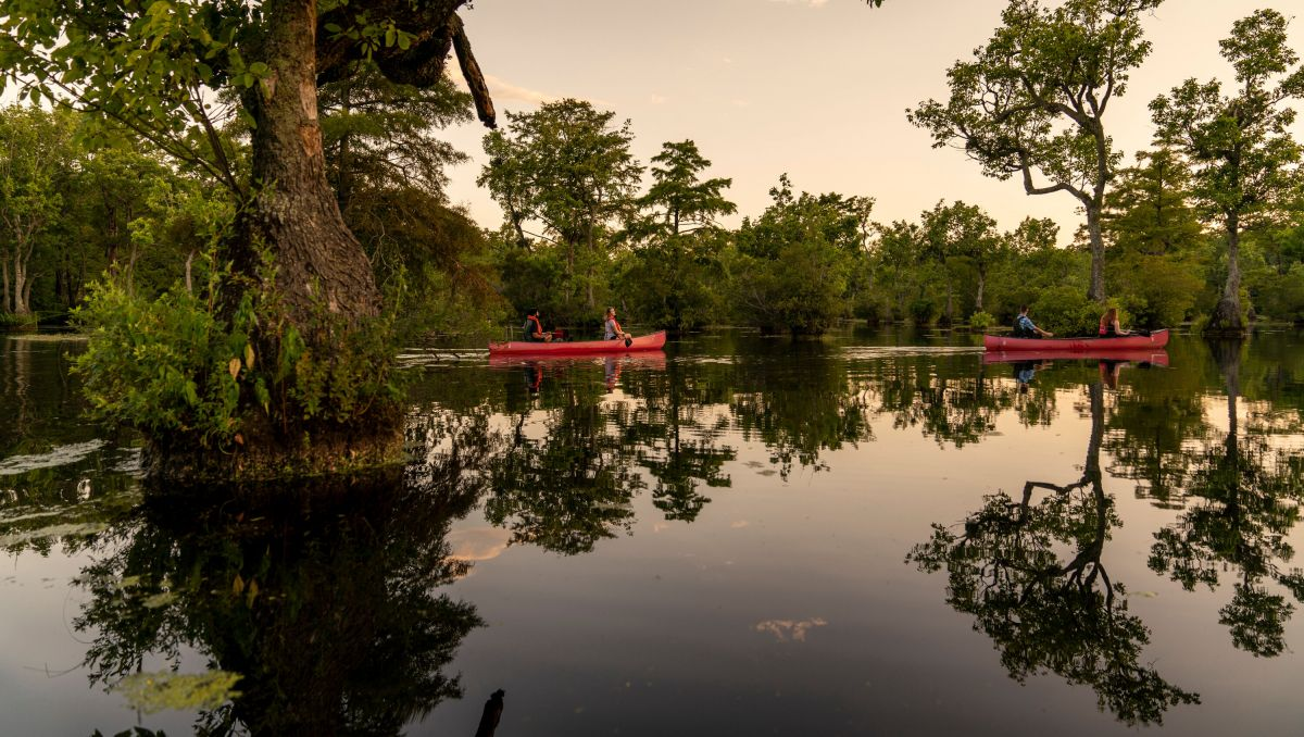 Two couples canoeing through Merchants Millpond State Park  surrounded by trees