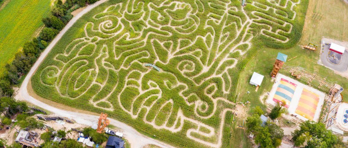 Aerial view of corn maze at Kersey Valley