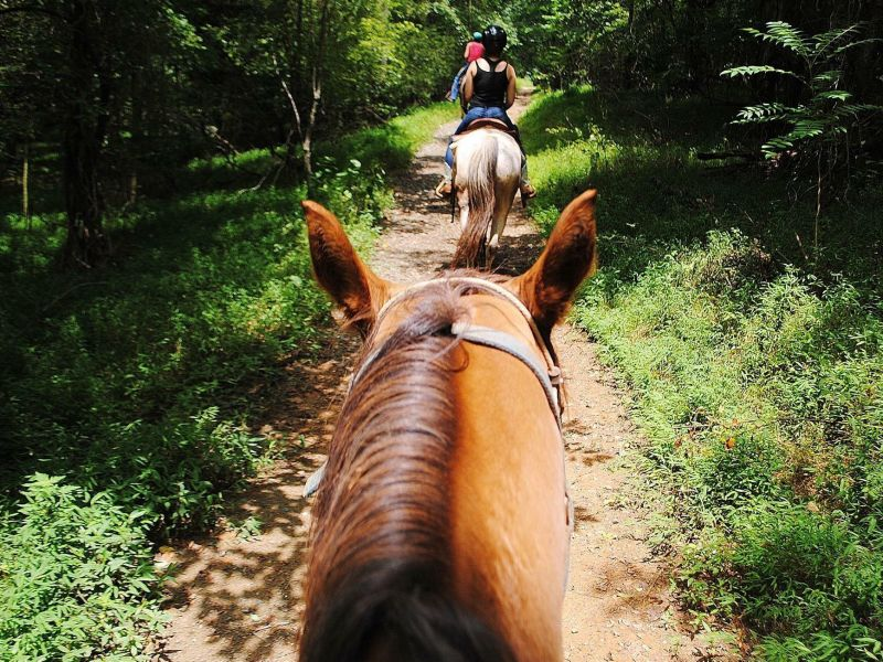 Bregman's Trail Riding | VisitNC com