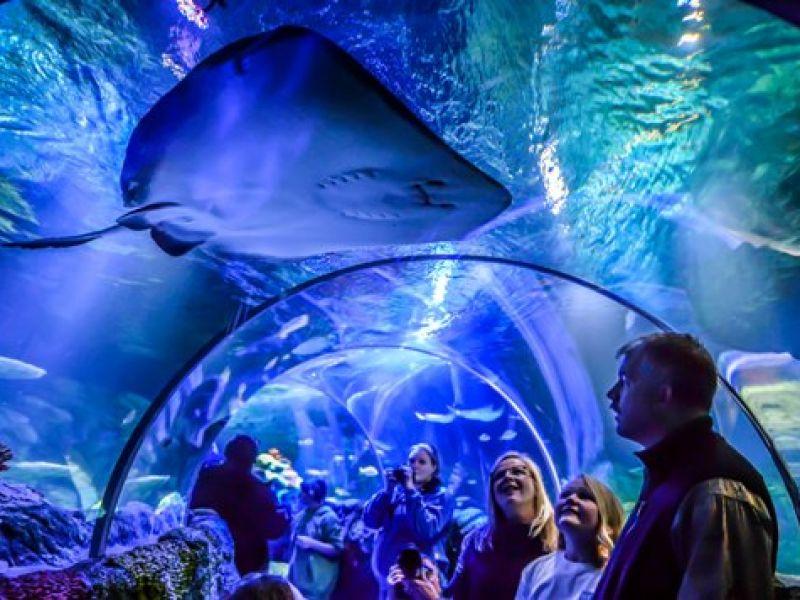 Sea Life Charlotte-Concord Aquarium | VisitNC.com