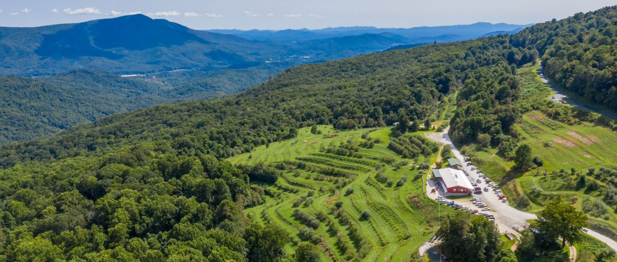 Aerial of Orchard at Altapass with green trees surrounding grounds with mountains in background