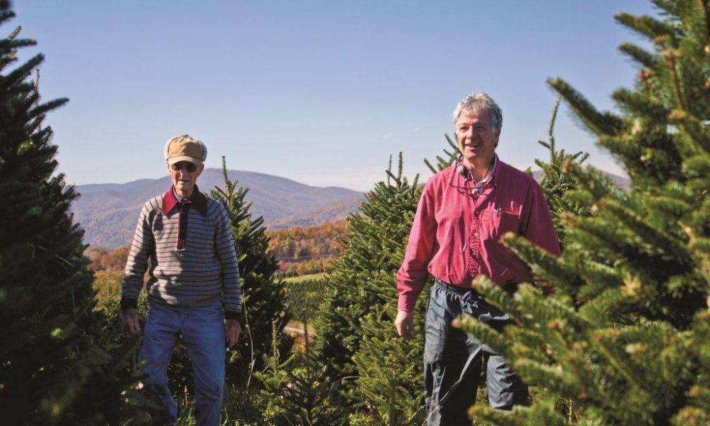 Cartner Christmas Tree Farm   VisitNC.com