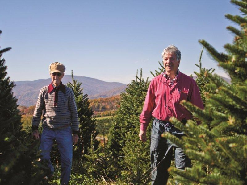 Cartner Christmas Tree Farm | VisitNC.com