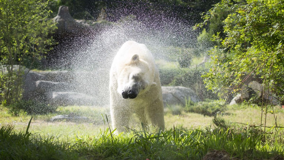 9 Places for Animal Safari Adventures in North Carolina