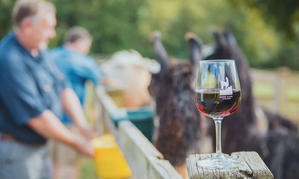 8 Wine Trails And Vineyards To Sample In North Carolina Visitnc Com,Types Of Quasi Experimental Research Design